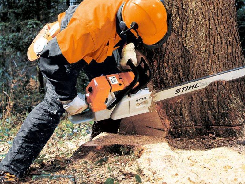 Спил и валка деревьев 1